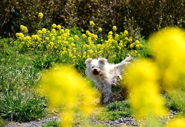 写真: 春の真ん中