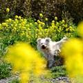 春の真ん中