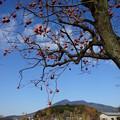 写真: 柿と筑波山