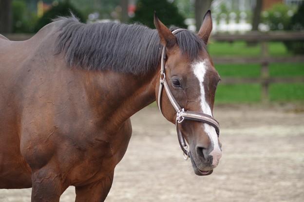 日本競馬の至宝ディープインパクトの母 ウインドインハーヘア