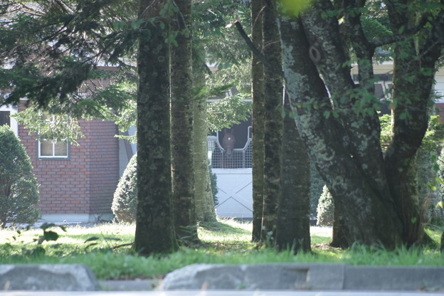 桜舞馬公園から見えるレックスの厩舎(ローエングリン)