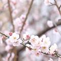 *旅先で見つけた春*