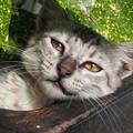 Photos: 安楽世界 Stray Cat in Macedonia             6/6~7/10 ルーマニア・ウクライナ・ポーランド方面旅行のため不在です