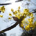 写真: 黄色