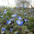 写真: 青い小花