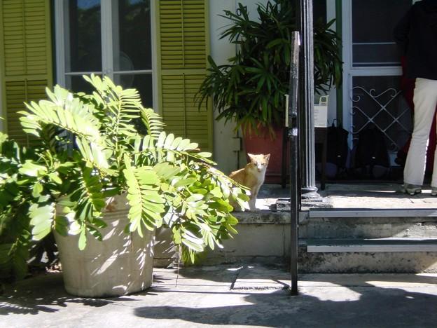 写真: ヘミングウェイの家