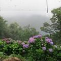 Photos: 雨とあじさい