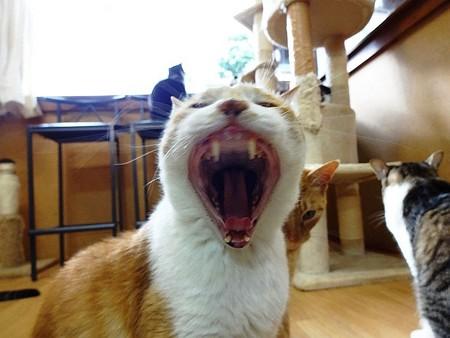 あつし「ほら!歯も歯茎も綺麗でしょ!?」