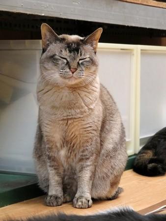 ミレイ「猫地蔵になってあげるわよ」