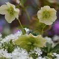 賑やかな春