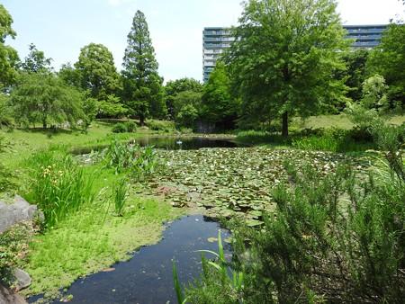 京成バラ園 睡蓮の池02