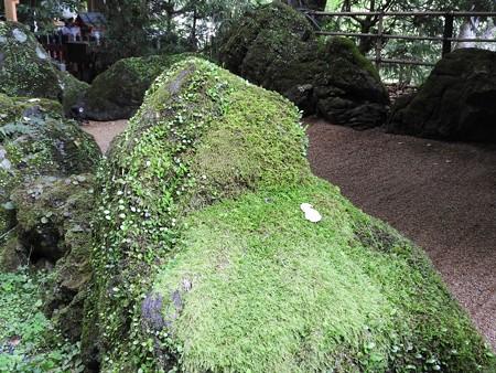 貴船神社 本宮10 石庭の岩のこけがすごい