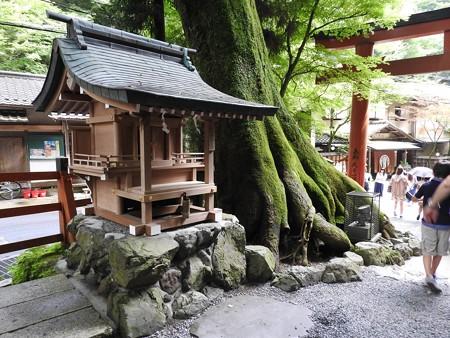 貴船神社 本宮12 白髭社と見事なケヤキ