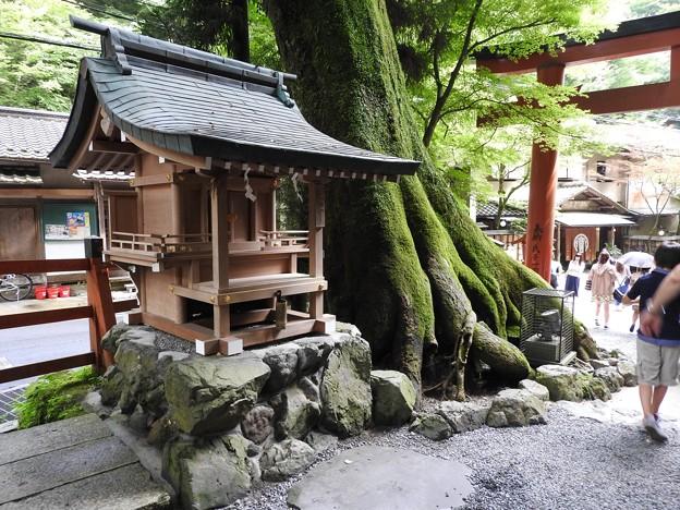 貴船神社 本宮12 白髭社と見事な槻の木(ケヤキ)