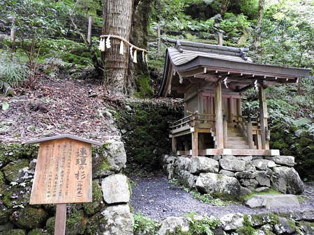 貴船神社 奥宮08 連理の杉(杉と楓)2