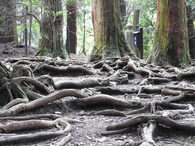鞍馬寺22-2 木の根道