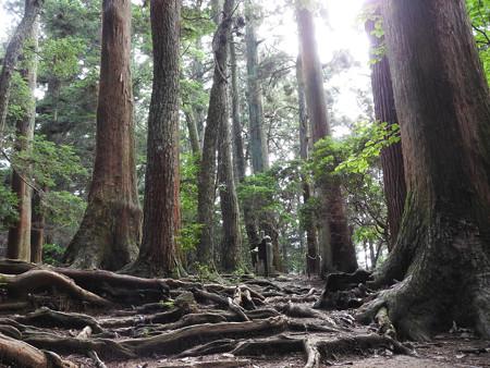 鞍馬寺25 木の根道 瀬織津姫と国常立神