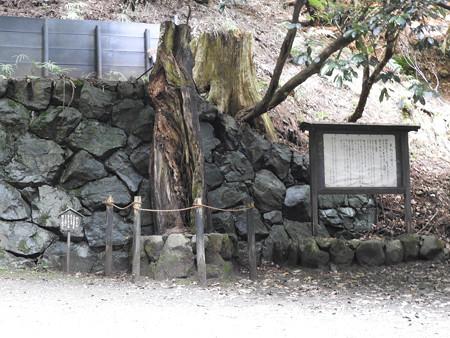 鞍馬寺42 木の幹の中に根!(楓の古木)