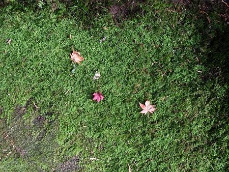 石山寺30 碧に落ち紅葉