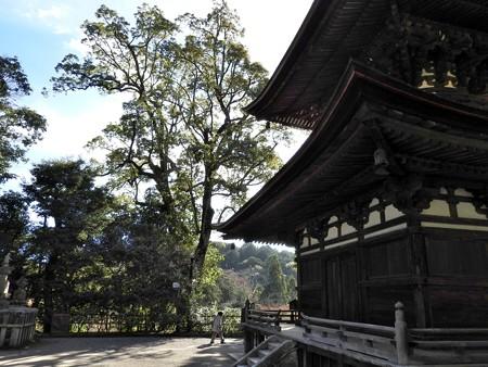 石山寺73 若宮横の樹1