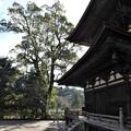 写真: 石山寺73 若宮横の樹1