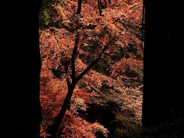 写真: 石山寺89 紅葉02