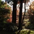 写真: 石山寺90 紅葉03