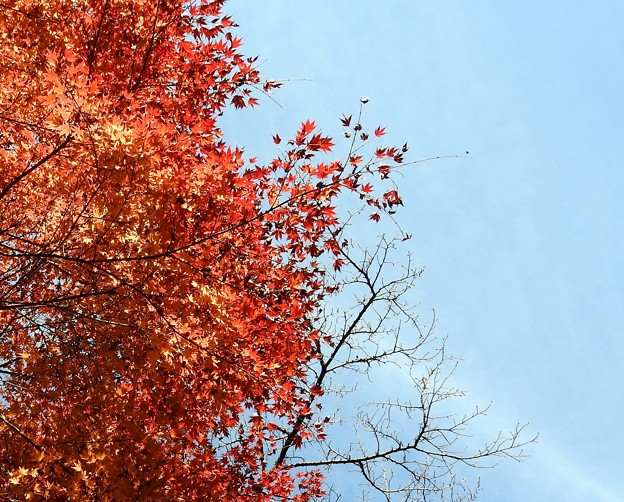 写真: 石山寺96 紅葉09
