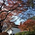 写真: 石山寺99 紅葉12