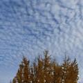 一面のうろこ雲