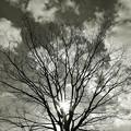 写真: 空まで届け