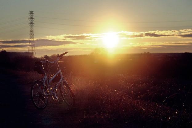 写真: 朝日に輝く