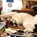 写真: 猫の開き3