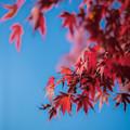 紅葉1@八丁湖