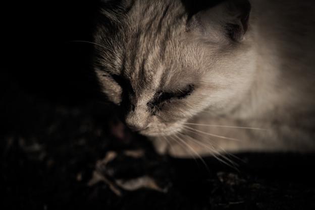 汚い猫4@八丁湖