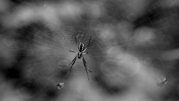 蜘蛛の巣城