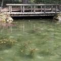 pz1625rs モネの池