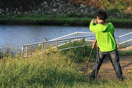 2011.10.07 和泉川 カワセミとパパラッチ