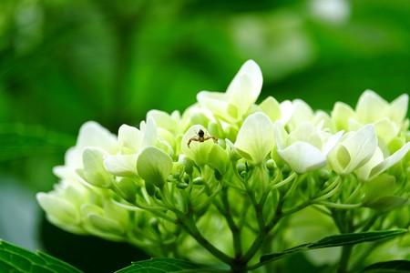 2016.06.06 追分市民の森 紫陽花に生きて