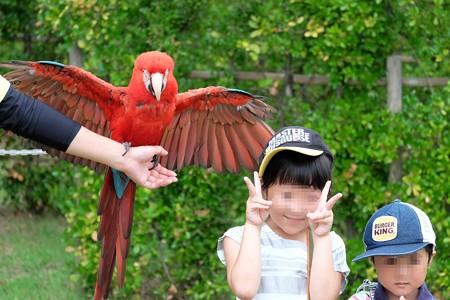 2016.07.25 Zoorasia バードショー ベニコンゴウと記念撮影