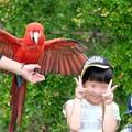 Photos: 2016.07.25 Zoorasia バードショー ベニコンゴウと記念撮影