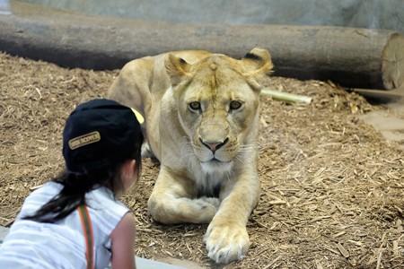 2016.07.25 Zoorasia 姫とライオン