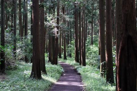 2016.09.28 追分市民の森 散歩道