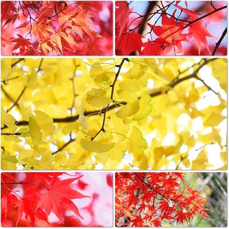 2016.11.18 大池公園 紅・黄葉