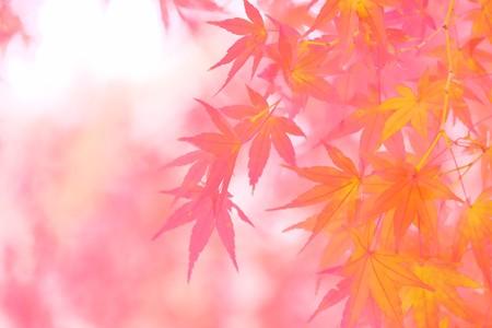 2016.11.28 和泉川 モミジ 微風