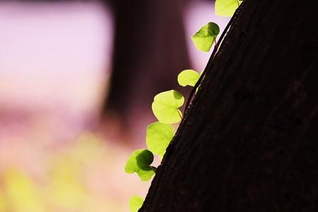 2016.11.29 瀬谷市民の森 蔦