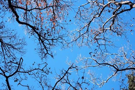 2016.12.17 瀬谷市民の森 落ち葉の季節