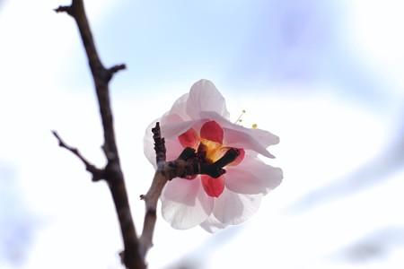 2017.02.08 大池公園 梅と空