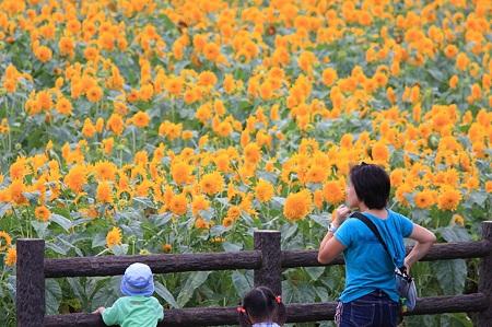 2010.08.07 追分市民の森 向日葵と親子