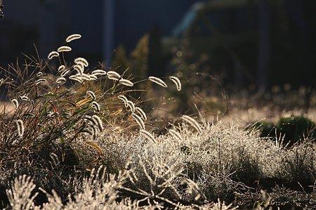 2010.11.05 和泉川 畑の朝
